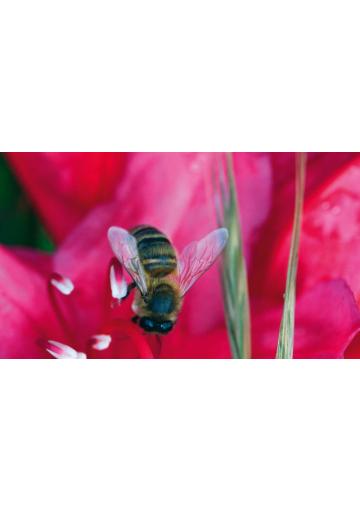 Homme et l'abeille : même combat (L')