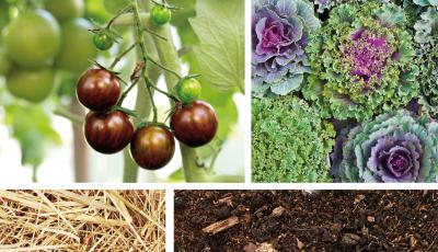 Une année au jardin avec les micro-organismes efficaces (E.M.) par Anne LORCH