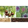 Une année au jardin avec les micro-organismes efficaces (E.M.)