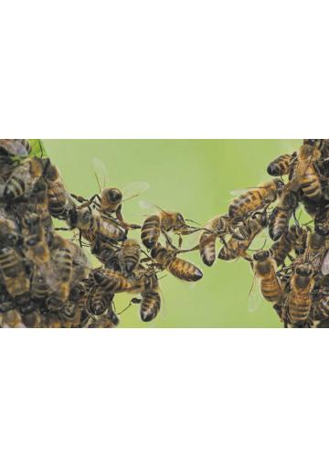 Crise des abeilles, crise d'humanité